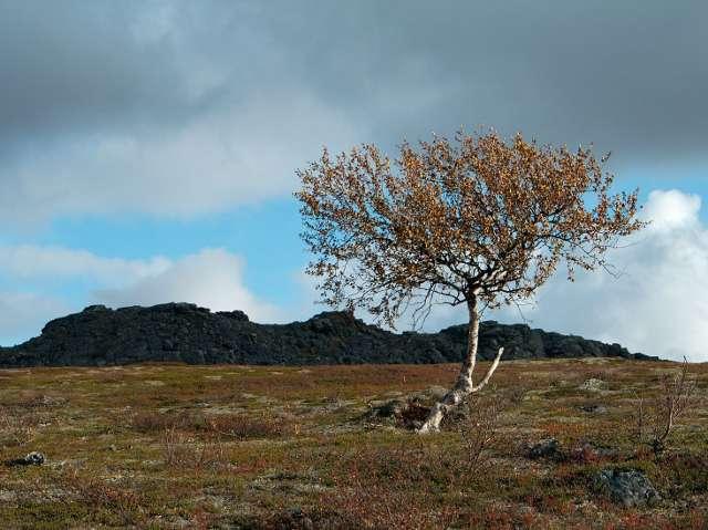 Geatkebassin kainalossa pärjäävät vain sitkeimmät puut